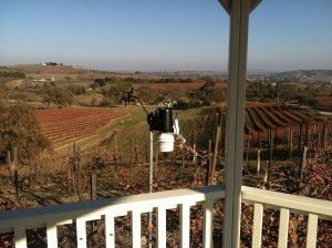 The view from the gazebo at the Fratelli Perata Vineyard on West side Paso Robles California