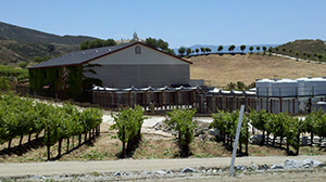 Temecula Leoness Barrel Room