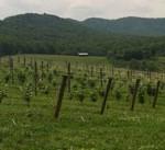 Pippin Hills Field