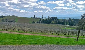 Stoller Vineyard Circa 2011 Dundee Hills Oregon