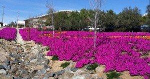 Temecula Leoness Flowers
