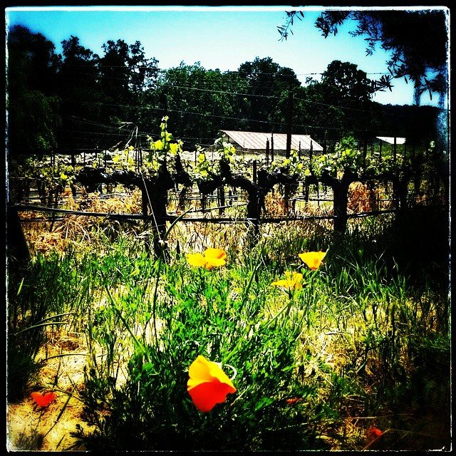 Spring time at the beautiful @tablascreek Where we had a…