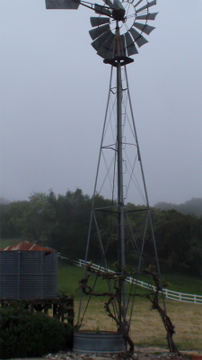 Zaca Mesa WIndmill foggy Morning