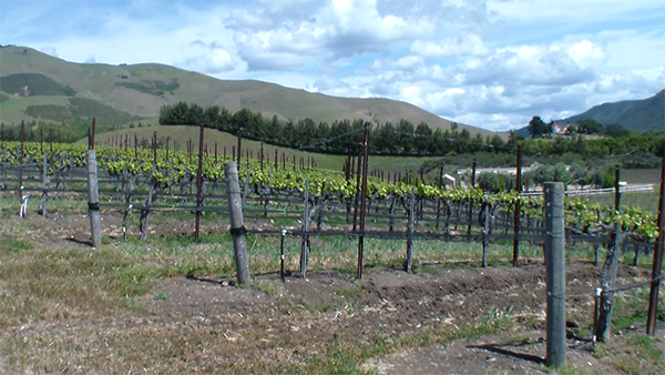 Talley Winery Landscape