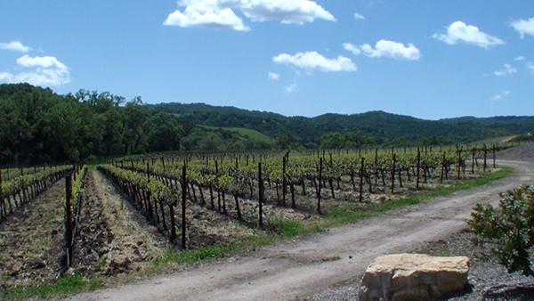 Halter Ranch Spring Vines