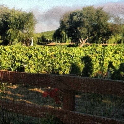 Clos Pepe in the Santa Rita Hills