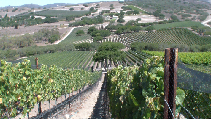 View of Pinot Vines