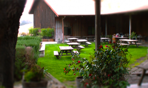 The Patio at Zaca Mesa