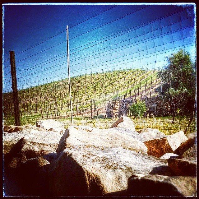 Beautiful Tablas Creek Vineyard in the spring