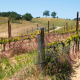 Tablas Creek Vineyards,Paso Robles