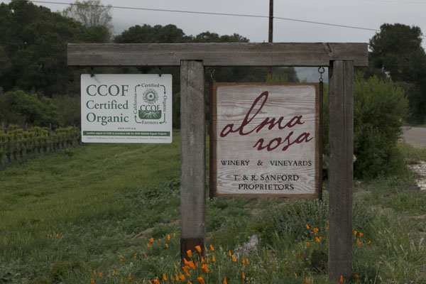 Alma Rosa Vineyard in the Sta. Rita Hills