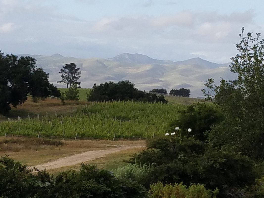 View of the San Rafael Mountains from Presqu'ile Winery